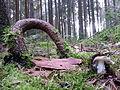 Pilzwald im Vogtland.jpg