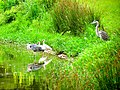 Pinckney Island National Wildlife Refuge (5957938359).jpg
