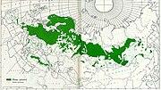Pinus sylvestris distribution map.jpg