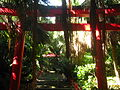 Plant life flourishes throughout the shrine at the cape.jpg
