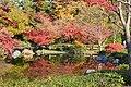 Plants in Showa Commemorative National Government Park, Japan; November 2018 (13).jpg