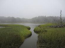 Estuary Marco Island Fl