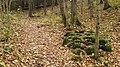 Pokaiņu mežs Лес Покайню 2015 - panoramio (12).jpg