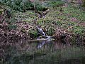 Pond near the Erlenbach-Spring.jpg