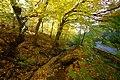 Praha, Jinonice, Prokopské údolí, podzimní potok.jpg