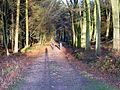 Primrosehill Wood - geograph.org.uk - 282730.jpg