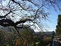 Princes Street Gardens, Nov 2011 (6322016815).jpg