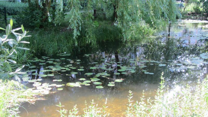 File:Protected park pond Altglienicke 4.djvu