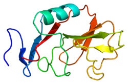 Protein KLRD1 PDB 1b6e.png