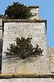 Provins - collégiale Saint-Quiriace - buis dans la façade.jpg