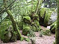 Puy Gaudy foret 88758 - panoramio.jpg