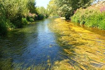 Río Tirón en la provincia de Burgos 3.jpg