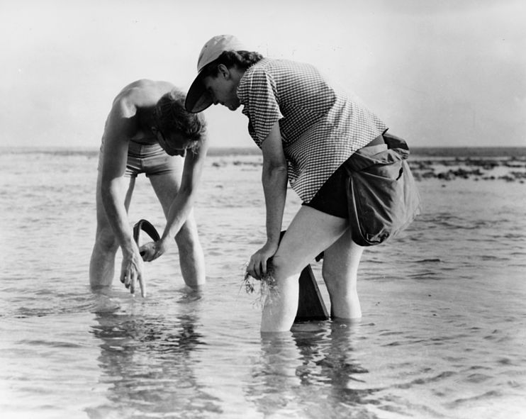 File:Rachel Carson Conducts Marine Biology Research with Bob Hines.jpg