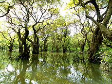 Ratargul Swamp Forest.jpg