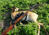 Recently harvested roe deer and suppressed rifle, Denmark 01.png