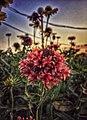 Red Flowers 1.jpg