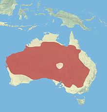 Red Kangaroo Habitat Red kangaroo - ...