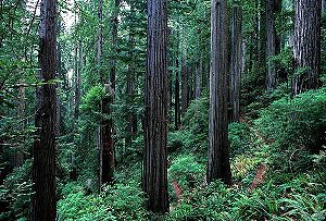 Return of the Jedi - The heavy forest of Redwood National Park was used to film the forests of Endor in Return of the Jedi.