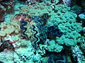 Reef2294 - Flickr - NOAA Photo Library.jpg