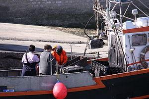 Retour de la pêche à la seiche du fileyeur Jason IV (24).JPG
