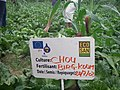 Reuse of ecosan nutrients in agriculture (2964624748).jpg
