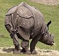 Rhino 1 (4505783379).jpg