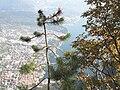 Riva Del Garda.cima sat.JPG