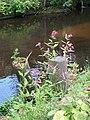 River Flowers, River Don, Oughtibridge - geograph.org.uk - 1293079.jpg