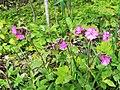 Rośliny w Czarnowie (3).jpg
