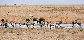 Roan Antilopes with Buffaloes, Zebras and one Eland at water hole ... (30033578573).jpg