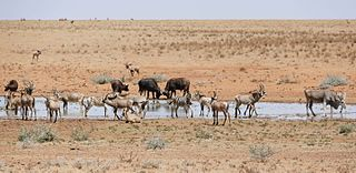 Mokala National Park A reserve in the Plooysburg area south-west of Kimberley in the Northern Cape, South Africa