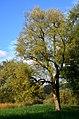 Robenhauser Riet 2012-10-13 17-07-47.JPG