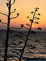 Rodos, Greece - panoramio.jpg