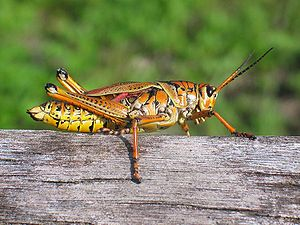 Adventist Youth Honors Answer Book/Nature/Insects - Wikibooks, open