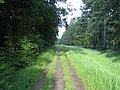 Roman road, Great Ridge near Chicklade 3 - geograph.org.uk - 917162.jpg