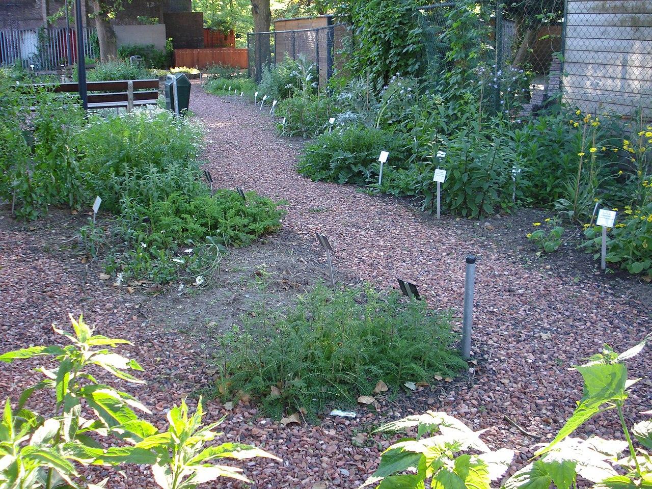 Botanische Tuin Rotterdam : File rotterdam afrikaanderplein tuin g wikimedia commons