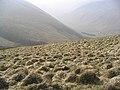 Rough grazing hillside - geograph.org.uk - 400438.jpg
