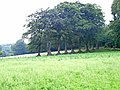 Row of trees - geograph.org.uk - 207937.jpg