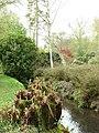 Royal fern growing beside stream - geograph.org.uk - 777414.jpg