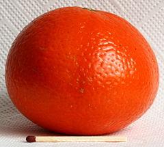 Saft-Clementine, Spanien, Supermarkt1661