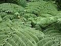 Sankt Lucia - panoramio - georama (33).jpg
