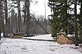 Sarkanās armijas brāļu kapi pie mājām Pumpuri (80 karavīri) WWII, Rembates pagasts, Ķeguma novads, Latvia - panoramio.jpg