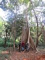 Scenes from Aralam Wildlife Sanctuary (8).jpg