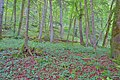 Schleitheim Auenwaldreservat Seldenhalde Bild 3.jpg