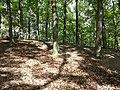 Schlossberg im Schwarzwald sl8.jpg