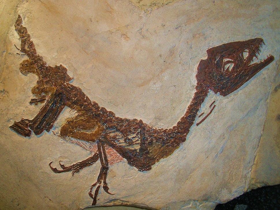 Scipionyx samniticus 232