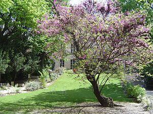 Sciences Po - Sciences Po garden, between the rue Saint-Guillaume and the rue des Saints-Pères