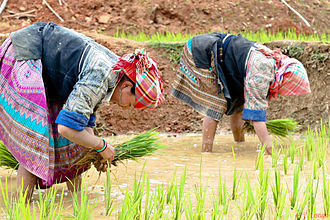 Bắc Kạn Province - Agriculture operations in the province
