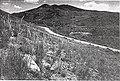 Sensitive plant species surveys, Butte District, Beaverhead and Madison Counties, Montana (1996) (20484723406).jpg