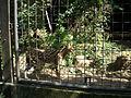 Serval - Artis.jpg